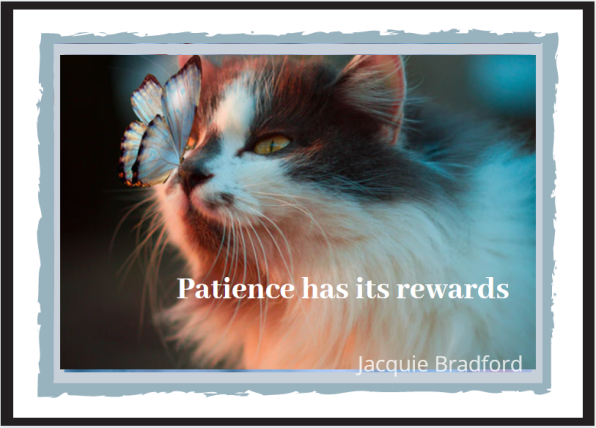 Meme_ Patience Has Its Rewards_ Photo Katrina Vorozheeva